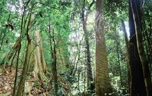 Khám phá vẻ đẹp siêu thực ở khu rừng cổ tích Bù Gia Mập