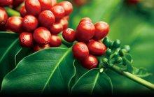 Bà trùm lĩnh vực cà phê ra chiêu độc chiếm đoạt gần 70 tỉ đồng