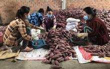Chăm lo trụ đỡ nông nghiệp