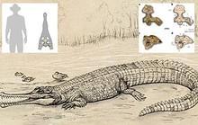 Đào được trùm cá sấu 5 triệu tuổi, to hơn nhiều loài khủng long