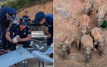 Chính phủ Trung Quốc đau đầu vì đàn voi bất trị