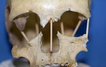 Cô gái 35.000 tuổi mang dòng máu 2 loài tiết lộ 2 lần biến đổi của con người