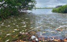 Mỹ: Thủy triều đỏ dữ dội làm chết 600 tấn cá ở bang Florida