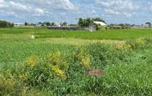 TP HCM kiến nghị cởi trói gần 700 ha đất