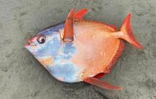 Loài cá gây chấn động khoa học dạt vào bờ biển