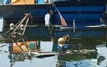Ngư dân bất lực nhìn tàu chìm vì không thể ra vào âu thuyền Thọ Quang