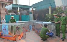 Khởi tố bị can, bắt tạm giam người nuôi nhốt 14 con hổ tại nhà