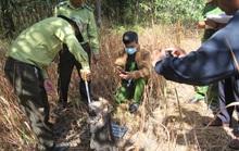 Lâm Đồng: Lấn chiếm đất rừng còn hành hung đoàn kiểm tra