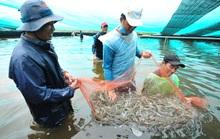 ĐBSCL: Nhiều loại nông sản, thủy sản giữ giá ổn định