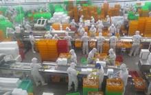 Giúp doanh nghiệp khôi phục sản xuất - kinh doanh (*): Không để đứt gãy chuỗi cung ứng nông sản, thực phẩm