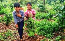 Đồng bào dân tộc thiểu số lên rừng hái măng, rau hỗ trợ người dân TP HCM chống dịch