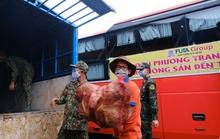 6.000 tấn rau sạch từ Lâm Đồng chuyển tặng TP HCM