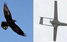 Sát thủ bất ngờ hạ gục drone của Google