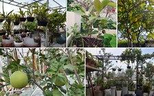 Vườn nhà trong phố
