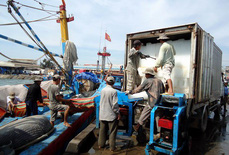 Để xảy ra vi phạm, giám đốc cảng cá sẽ bị mất chức