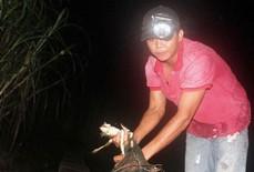 Săn ếch trên rừng, thấy nhiều cũng không dám bắt thêm