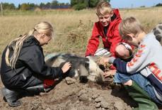 Đan Mạch quyết trở thành quốc gia hữu cơ 100% đầu tiên