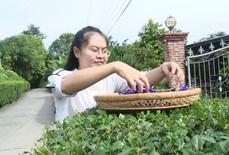 Cô giáo 9X làm trà từ hàng ngàn loại hoa ở Sa Đéc
