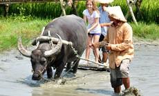 Du lịch Việt Nam nhìn từ vụ chia đôi đoàn 4.000 khách