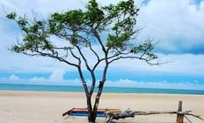 """10 cây cô đơn """"sống ảo"""" của giới trẻ Việt Nam"""