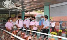 Dự án nuôi gà đẻ trứng tại Làng SOS Bến Tre