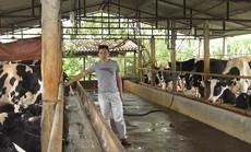 Mua ô tô nhờ nuôi bò sữa
