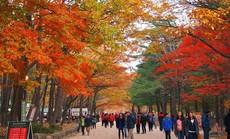 8 trải nghiệm không thể bỏ lỡ khi đến Hàn Quốc mùa thu