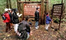 """Khu rừng """"rợn tóc gáy"""" ở Nhật Bản"""