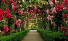Những vườn hoa đầy mê hoặc ai cũng thích mê