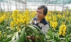 """Mỏi mắt ngắm những vườn địa lan """"khủng"""" nhất Việt Nam"""