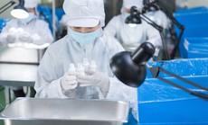 Tăng sức bật cho xuất khẩu TP HCM