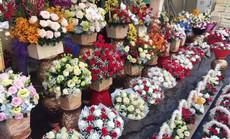 Giá hoa hồng tăng chóng mặt