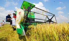 Phải sớm có thương hiệu nông sản Việt