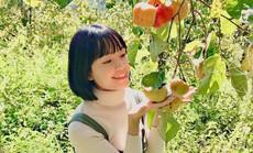 Vườn hồng Đà Lạt vào mùa chín đỏ hút giới trẻ