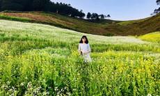 Vùng đất của giấc mơ hoa