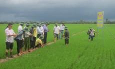 Bình Điền đưa nông dân tham dự khóa tập huấn tại Thái Lan