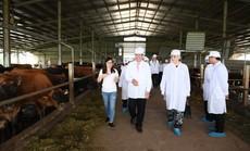 Thứ trưởng Hà Lan thăm dự án phát triển vùng chăn nuôi bò sữa tại Hà Nam