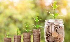 Trees4RealEstate - Gói quà tiết kiệm bền vững cho tương lai
