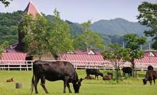 """Top 10 mô hình chăn nuôi """"hái ra tiền"""" tại Việt Nam"""