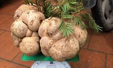 Một cây nấm giá 10 triệu đồng, người Việt vẫn đổ tiền mua?
