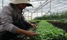 Phát triển phân bón hữu cơ trong nước