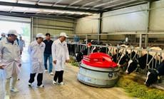 OIE tham gia đánh giá và công nhận vùng chăn nuôi bò sữa an toàn dịch bệnh