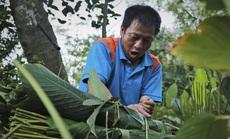Người vùng trồng lá dong lớn nhất Hà Tĩnh trúng mùa