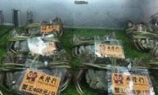 """Loại cua """"nhà giàu"""" bán tràn lan chỉ từ 45.000 đồng/con, tiểu thương tiết lộ sự thật"""