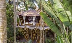 Ngôi nhà trên cây đẹp đến mức ai cũng ước ao ghé thăm