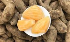 Đặc sản Lào Cai giá rẻ như khoai