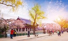 Trải nghiệm một Hàn Quốc mới lạ cùng BenThanh Tourist