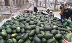 Dân Hà Nội đổ xô mua dưa hấu giải cứu nông dân các tỉnh phía Nam