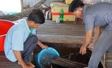 """Chuyện con cá kêu """"éc éc"""" ở Phú Tân - An Giang"""