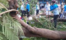 UBND TP HCM chỉ đạo gì sau vụ cây phượng vĩ ngã đè chết 1 học sinh?